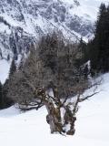 Bregenzerwald 19